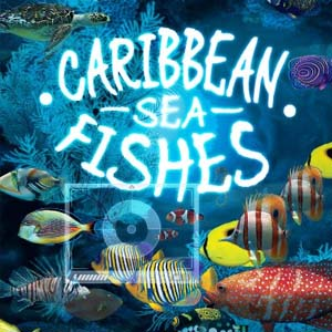 Acheter Caribbean Sea Fishes Clé Cd Comparateur Prix