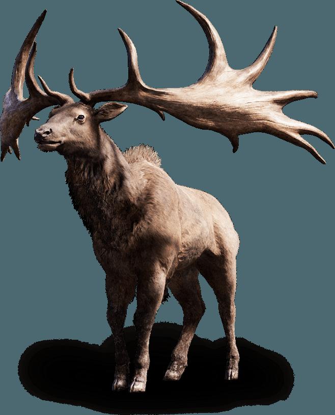beast elk