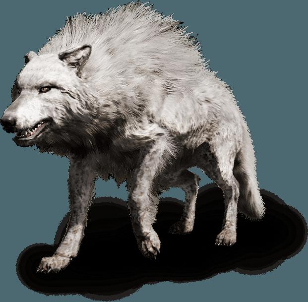 wolf beast