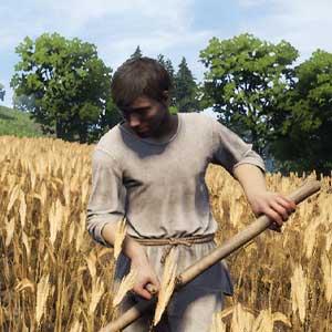 Les cultures agricoles de la Medieval Dynasty