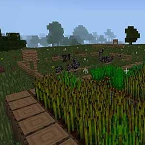 l'herbe se balancent dans la brise