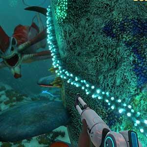 Plongez dans un vaste monde sous-marin