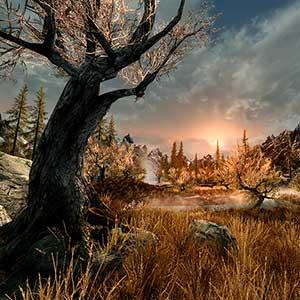 The Elder Scrolls 5 Skyrim VR - Forêt