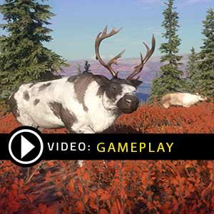 theHunter Call of the Wild Yukon Valley Gameplay Video