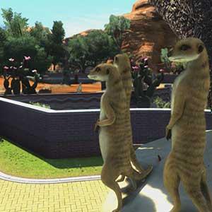 zoo tycoon suricates